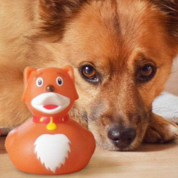 LILALU rubber duck dog with a dog